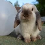 5 raisons de craquer pour un lapin nain !